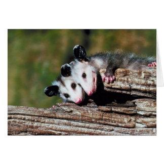 Opossum Card