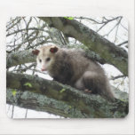 Opossum in a Tree Mouse Pad