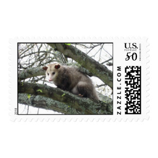 Opossum in a Tree Postage