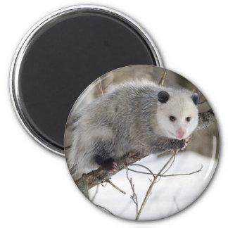 Opossum Love 2 Inch Round Magnet