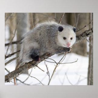Opossum Love Poster