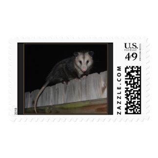 Opossum Stamp