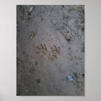 Opossum tracks poster. poster