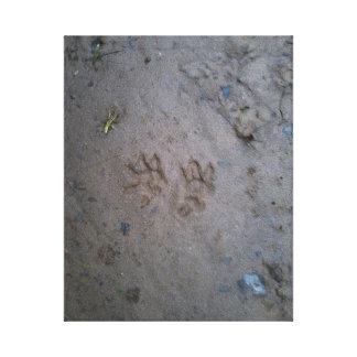 Opossum tracks stretched canvas print