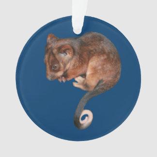 Oposum adorable del Ringtail del bebé en Australia