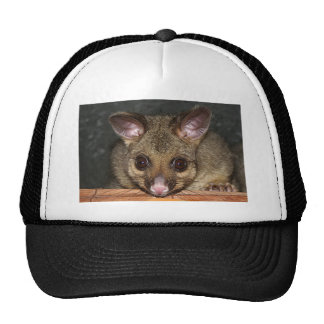 Oposum australiano lindo gorro