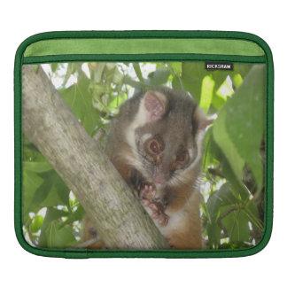 Oposum en un árbol fundas para iPads