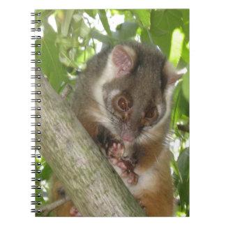 Oposum en un árbol libreta
