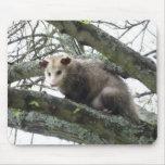 Oposum en un árbol tapete de ratones