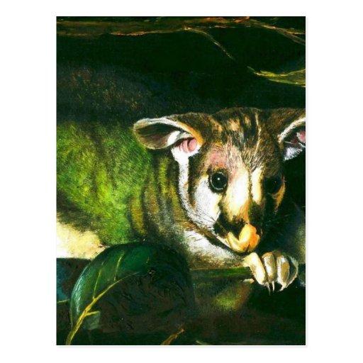 Oposum tímido tarjetas postales