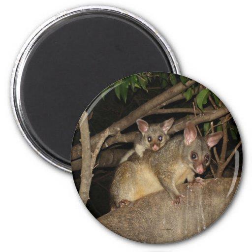 Oposums de Brushtail Imán Redondo 5 Cm