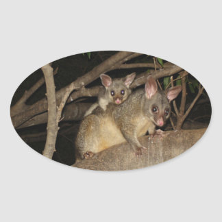 Oposums de Brushtail Pegatina Ovalada
