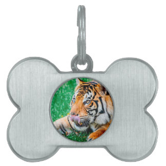 Opportunity Pet Tag