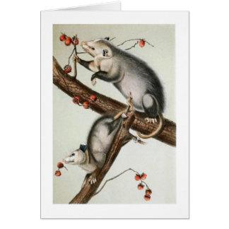 Oppossums de Audubon Tarjeta De Felicitación