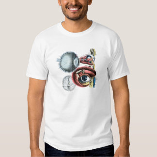 Optometría del ejemplo de la anatomía del ojo camisas