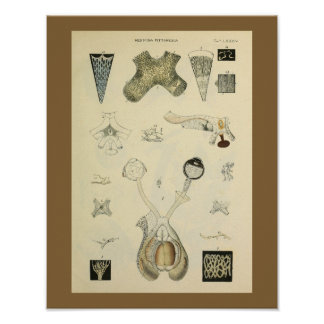 Optometry Eye Vision Anatomy Art Print