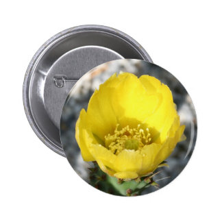 Opuntia Ficus-Indica Prickly Pear Flower Button