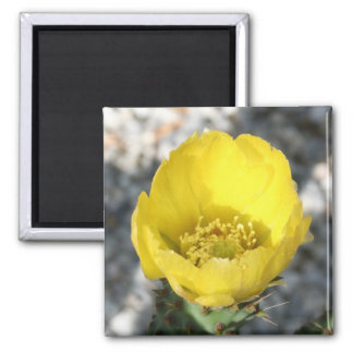 Opuntia Ficus-Indica Prickly Pear Flower Magnet
