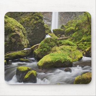 OR, Columbia River Gorge, Elowah Falls and Mouse Pad