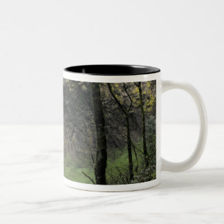 OR, Columbia River Gorge, Elowah Falls, McCord Two-Tone Coffee Mug
