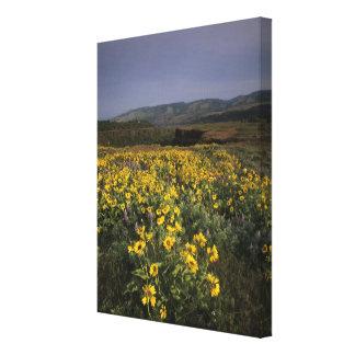 OR, Columbia River Gorge, Rowena Plateau, Tom Canvas Print