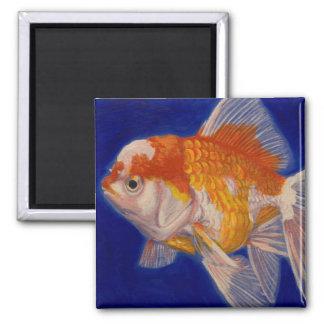 Oranda Goldfish Magnet