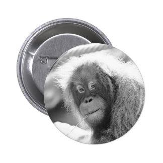 Orang Utan 215 BW Pinback Button