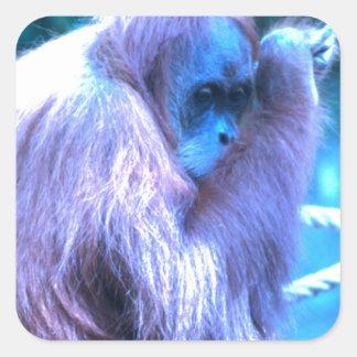 Orang Utan, azul púrpura Pegatina Cuadrada