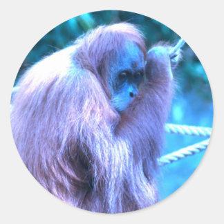 Orang Utan, azul púrpura Pegatina Redonda