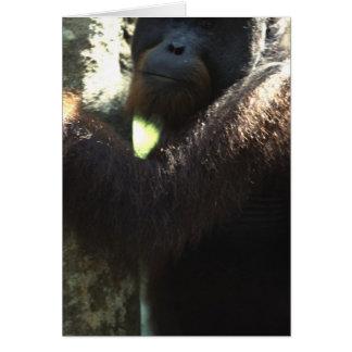 orang utan in Borneo Card