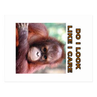 orangatang post cards