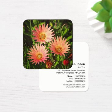 Professional Business Orange African Daisies Square Business Card