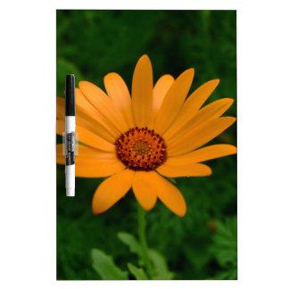 Orange African Daisy Dry Erase Board