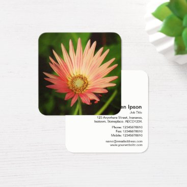 Professional Business Orange African Daisy Square Business Card