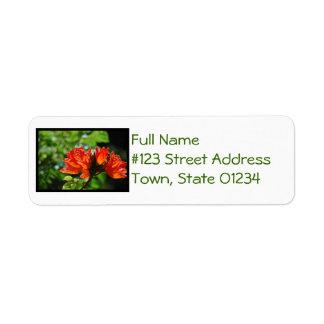 Orange African Tulip Tree Custom Return Address Labels