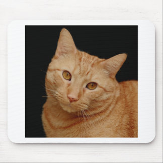 Orange American Shorthair Cat Mouse Pad