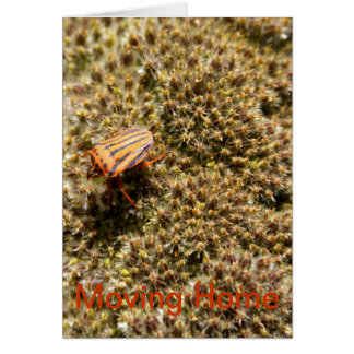 Orange and Black Beetle Moving Home Card