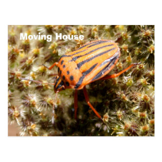 Orange and Black Beetle Post Card Post Card