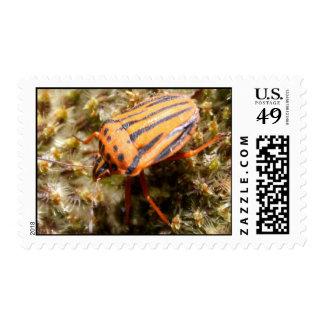 Orange and Black Beetle Postage