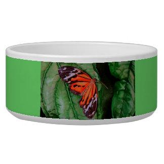 Orange and Black Brazilian Butterfly Bowl