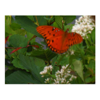 Orange and Black Butterfly at the Lake Postcard