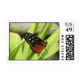 Orange and Black Butterfly on Leaf Postage