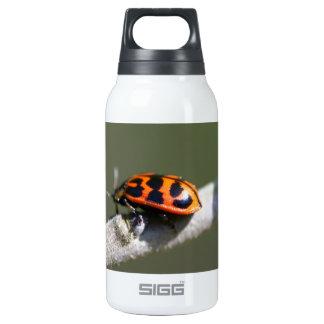 Orange and Black Leaf Bug - Chrysomela Insulated Water Bottle