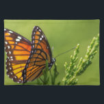 """Orange and Black Monarch Butterfly Cloth Placemat<br><div class=""""desc"""">This is a lovely monarch butterfly,  Danaus plexippus,  also called a milkweed butterfly. This one was in Morgan County Alabama USA.</div>"""