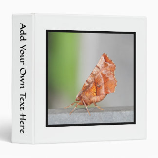 Orange and Brown Moth. Binder