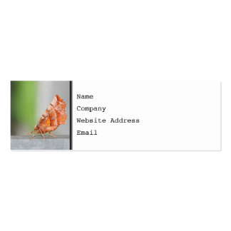 Orange and Brown Moth. Double-Sided Mini Business Cards (Pack Of 20)
