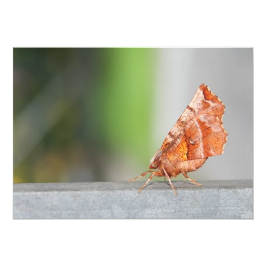 Orange and Brown Moth. Card