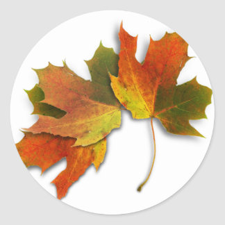 Orange And Golden  Autumn Leaves Classic Round Sticker