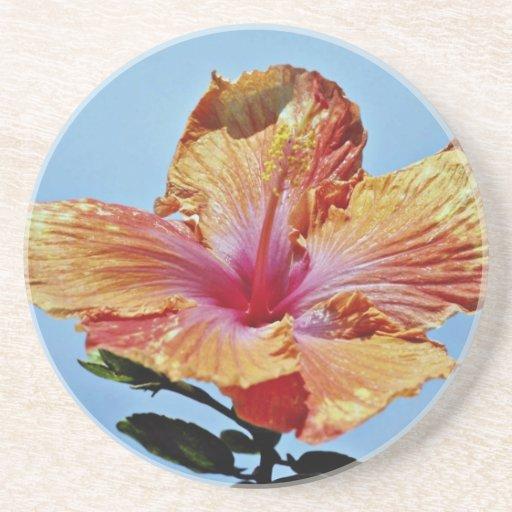 Orange and pink flower, hybrid hibiscus  flowers coasters