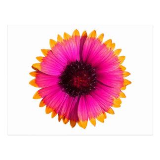 Orange and Pink Flower Postcard